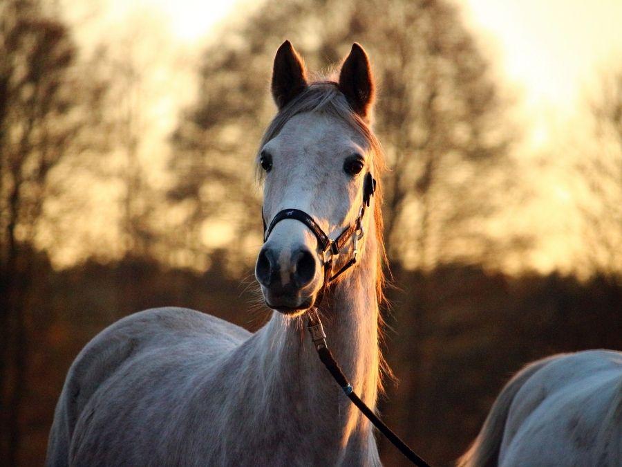 Uitnodiging 2de Inspiratiedag Paard in het Landschap